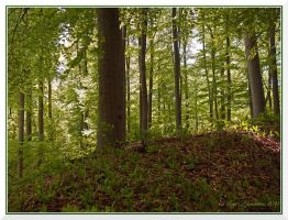 Beech forest 2 by Vampirbiene