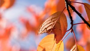 fAlling for Autumn by fridaythe13th