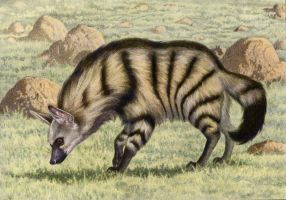 Aardwolf by WillemSvdMerwe