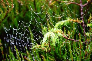dew spider web by Blue-Norway