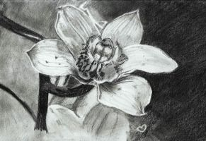 Orchid by Jodi0427