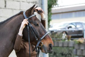 Putting on a Bridle - Step 011 - Forelock by LuDa-Stock
