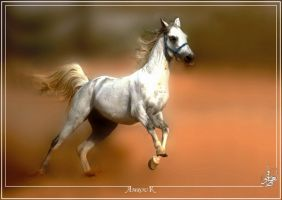 Feel free - Arabian horse by AMROU-A