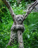 Tree Hugging Cub by filemanager