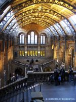 Natural History Museum by AngelSamui