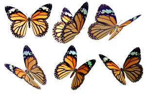 Butterflies 4 PNG Stock by Roys-Art