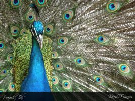 Peacock Tail by KarenDFrancis