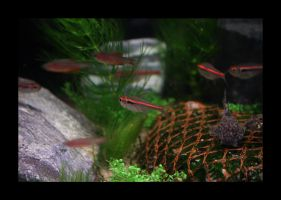 Fish In The Tank 02 by Hector42