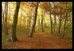 Forest of October - reprise by Dwor-kin
