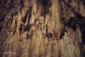 Rotten wood I by Seeb-san