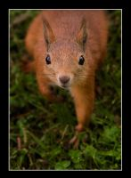 Squirrely Thing by Creepling