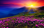 Purple Flowers Valley by tommyqwerty