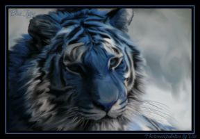 Blue Tigre By Dee by ToxieFox