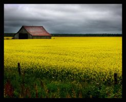 Across the Yellow Fields by Ciuin