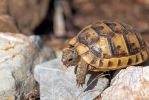 Baby tortoise by Th30ther0ne