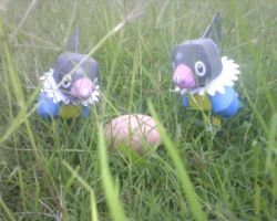 chatot couple with egg by turtwigcuTey