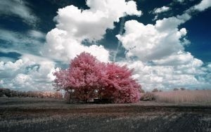 Pink Trees by myINQI