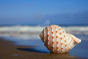 Seashell on the Seashore by Spanishalex
