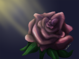 A simple lone rose by Whitelupine