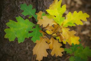 Fall Colors by JForbes1701