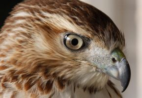 Ollie 8 by ravenofthenight