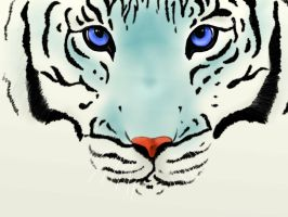 Tigre Blanc by tite-pao