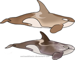 Cappuccino/Antartctic Orca: Redesign for Ninuturu by WeisseEdelweiss