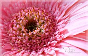 Decor by eyedesign