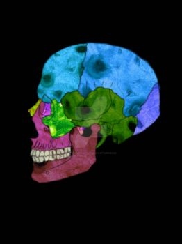 Skull (Histological Bone Microphotography Edition) by TheInvingator