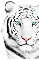 White Tiger Iphone 4 Wallpaper by supamade09