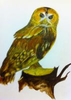 owl by candycotten