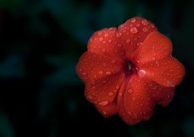 Red Flower by thenIsaidno