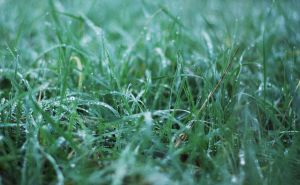 Dew on Grass by Akito666z