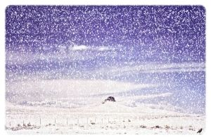 Just after a White-out. Arizona. USA by jennystokes