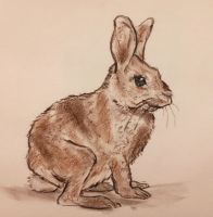 Watership Down by CpointSpoint