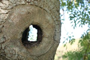 'See Through' Tree by julie29