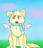 Happy B-day Daphy C: by FreeSpiritWolf