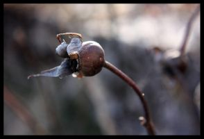 Once a Rose 2 by smeghead1976