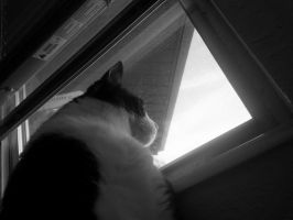 Gazing out the Window by Tyger-Boy