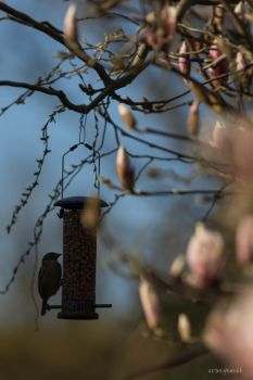 Bird Feeder by crazykeith2