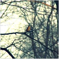 nuthatch the spring watcher by snusmumrikenn