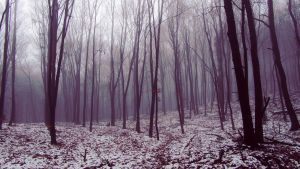 Deep Foggy Forest by Rhoey