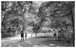 Walking in Yoyogi Park by Pajunen