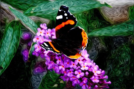 butterfly in color by dyrholm