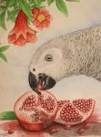 african grey and pomegranate by asio-otus-otus
