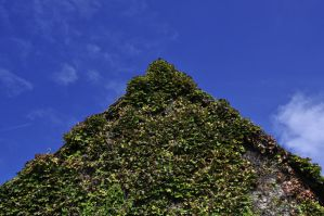 ivy roof by marlene-stock
