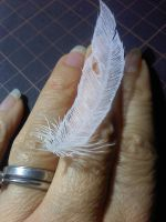 feather paper cutting by Thessatoria