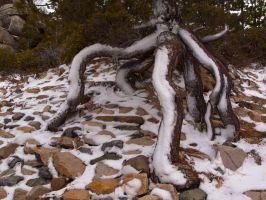 Winter comes to the Octopus Tree by MartinGollery