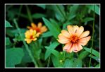 Tiny Orange Flower by adirtywordxx