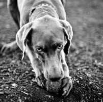A Dog and His Ball by gsibble